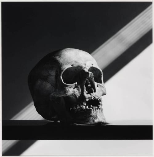 moshita:  Skull 1988, printed 1990 Robert Mapplethorpe