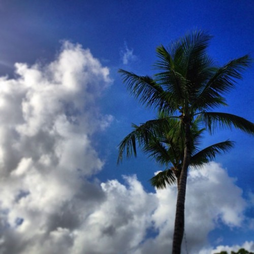 #guam #palmtree #cloud #instagram #webstagram #sky