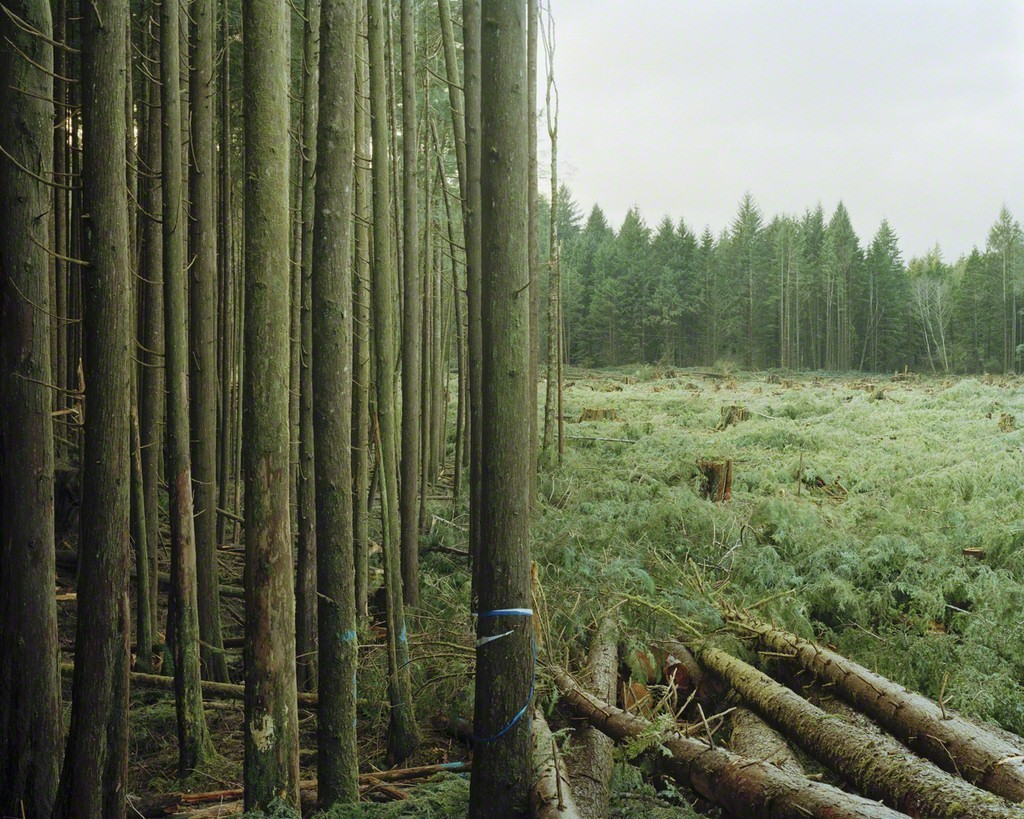 Freshly Felled Trees (2007) | Eirik Johnson