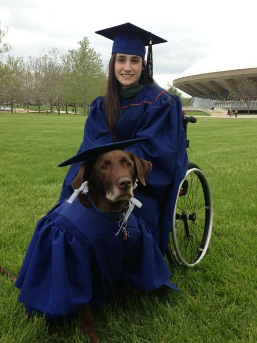 herodogblog:  Hero, a chocolate lab service dog, got his own cap and gown at his owner's graduation last week. The woman credits him with helping her achieve a Master's degree. Hero knows over 40 commands and was known to pull her wheelchair up ramps to help her get to class on time.