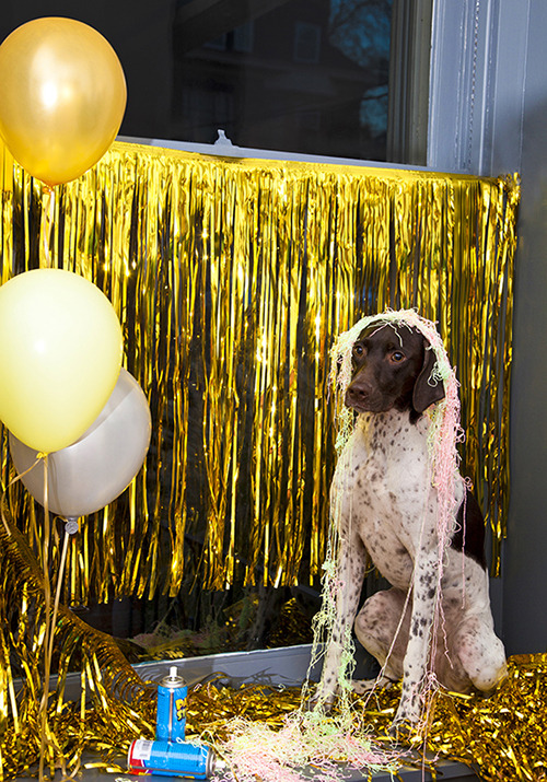 modcloth:  Luna was paws down the silliest party guest.