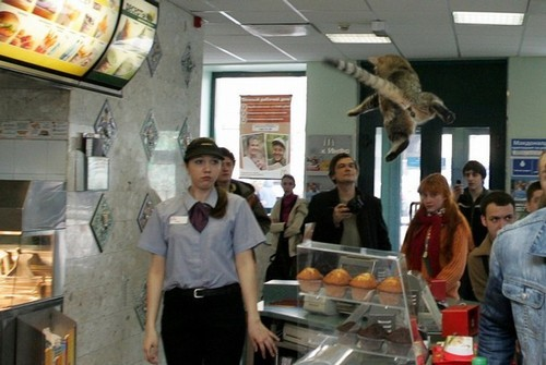 tibets:  here is a cat that was thrown in burger king