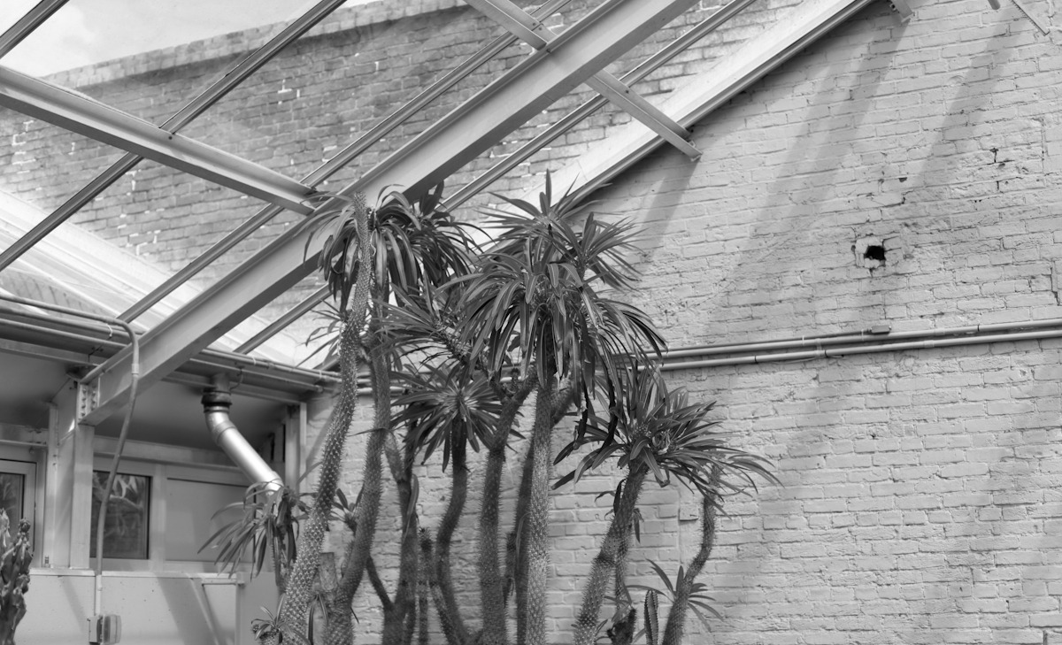 Conservatory and Botanical Gardens, Baltimore, MD, March 2013