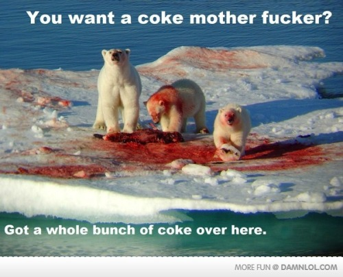 i no longer find polar bears cute and innocent……