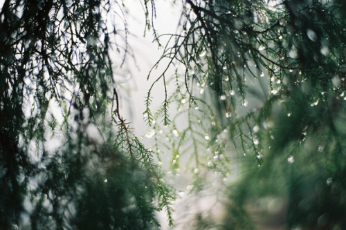 . by Katarina Kri on Flickr.