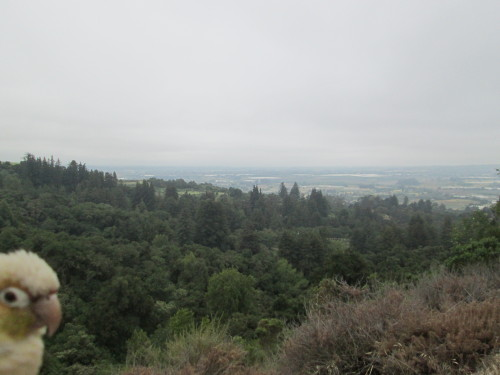 Looking down on Watsonville and the ocean…