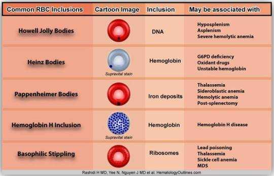 Inclusion Bodies of Red Blood Cells – The Art Of Medicine