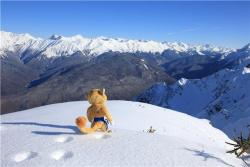 olympics:  #spotted: The Leopard in the Mountains of @Sochi2014