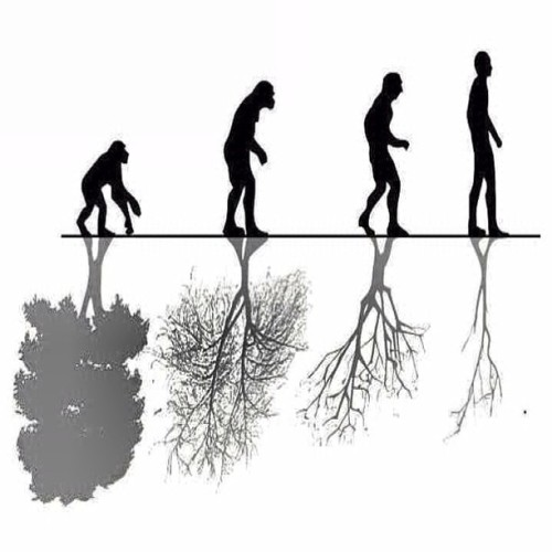 9gag:  Evolution