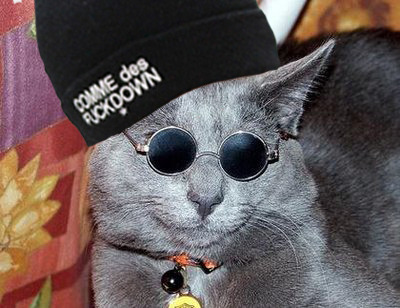 rappersandanimals:  meet the newest member of A$AP MOB A$AP MEOW  A$VP FVR