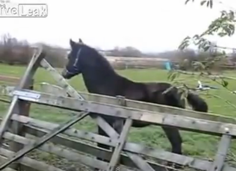 Hump Day Video Round Up! Horse Flips Out, Literally - They're so majestically clumsy. Picture Prank - Just taking our-selfies. Stock Dump Commentary: A Stockumentary - Finally, they've released the directors cut. Guy Disarms Shotgun Robber - Cue Benny Hill theme.