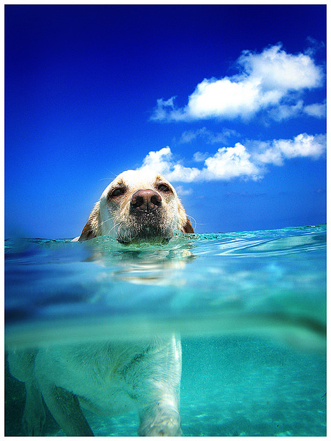 magicalnaturetour:  Underwater Camera Fun (by Noel back in Zurich)