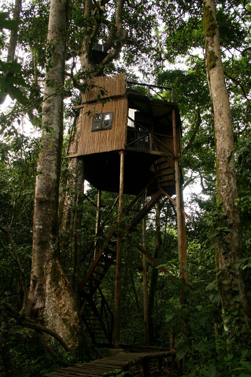 hippist:  h4ilstorm:  Chimps Nest (by zimpetra)  ive always wanted to build a treehouse