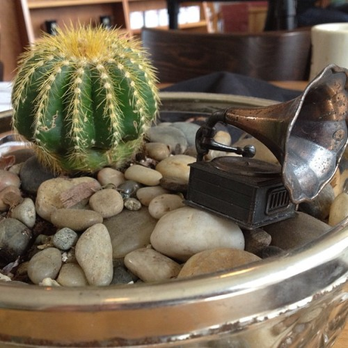 Victrola and a cactus in a bowl of rocks. #victrola #seattle #coffee #artsy #sunday #coffeehouse