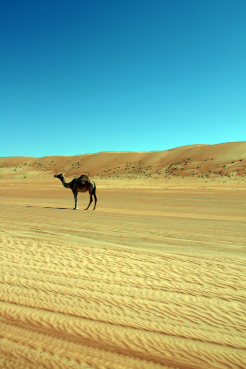 touchdisky:  Oman by Sharp//Eye
