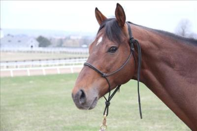 Yo Canadian equestrians! Got $1,000? You can own the full brother to a Breeders' Cup Classic winner! This quirky 6-year-old gelding just retired off of track training. Alpha Wave is the full brother to Ghostzapper and a half to City Zip.