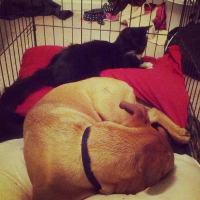 #BruceDog and #SelinaCat in the crate.