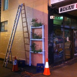 The new #herb #ladder is up and ready to browse at #threeropes #parramatta #urban #veg #butwaittheresmore #verticalgarden #igers #igerssydney #igers #greenwall (at Three Ropes Cafe)