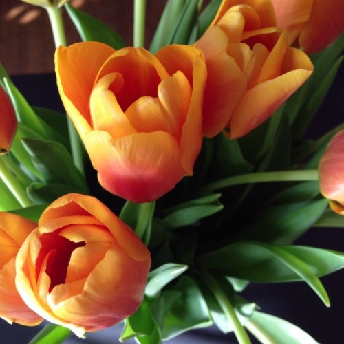 Happy #Spring! #tulips #detroit  (at la nouvelle chez mimi)