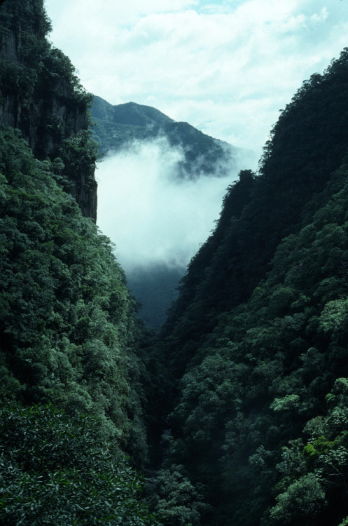 woodlandsouls:  Brazil - 2004 (211-26) (by MacClure)