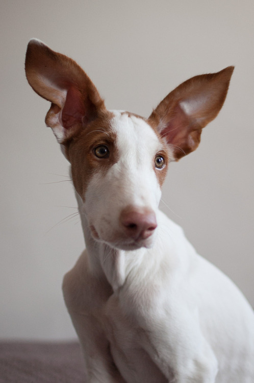 darnyill:  Lu Minkee, those ears!!