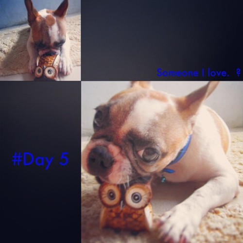 #day5 difficult one, #frenchie #tiled#30dayphotochallenge