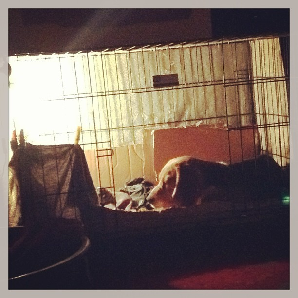 Naya watching her babies. 🐶 Alam ko cute kayo, pero please patulugin niyo na ako :(( #beagle