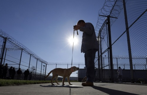 (via Puppy training: Future service dogs head to maximum-security prison)