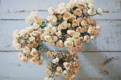 socialsurvival:  untitled by Olivia Rae James on Flickr.