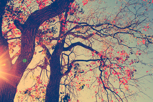Nature ^^  on We Heart It - http://weheartit.com/entry/62085218/via/sarahsookrajj   Hearted from: http://lockerz.com/u/selma.husnic.1/decalz/25662593/nature_?ref=selma.husnic.1