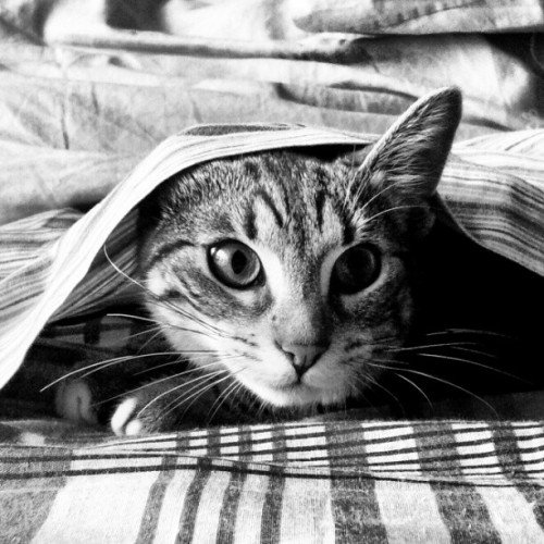 PHOTO OP: In Hiding Via peppegio89.