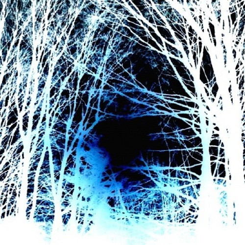 Into The Woods.  #PhotoArt #winter #snow #trees #woods #art #color #blue #December #KarenGlosserDesigns #photography