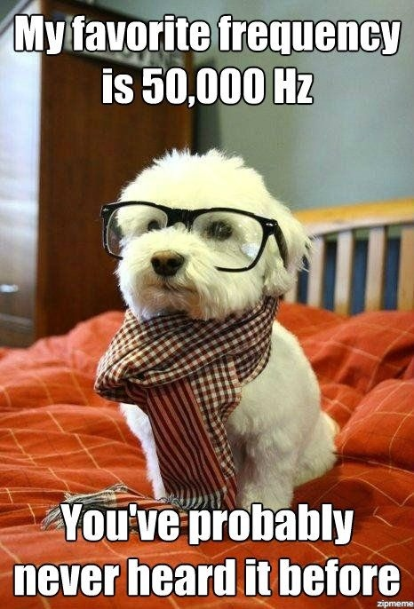 HIPSTER DOG. Funnier and cuter than Hipster Cat.