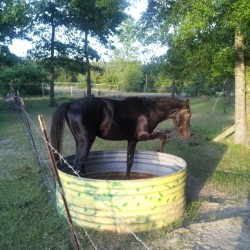 Damn horse get out of the water bucket  (at City of Blanchard)