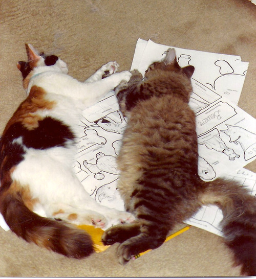 derpycats:  Ramona and Randy enjoy an afternoon nap together.