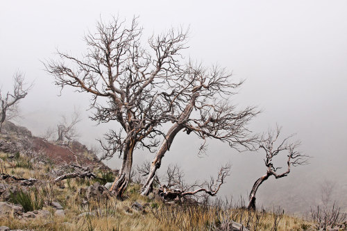 wagnerchristian:  This spooky atmosphere is common in the highlands of Madeira