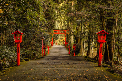 japanlove:  The Lantern Path by lestaylorphoto on Flickr.