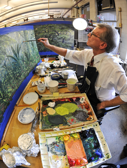 amnhnyc:  Museum artist Stephen C. Quinn paints a mural for a new exhibition opening this fall. Quinn has worked on dioramas here at the American Museum of Natural History for nearly 40 years.  © AMNH/D. Finnin