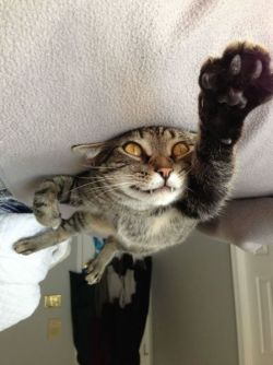 "catsbeaversandducks:  ""Up! Up and away!"" Photo/caption via addelburgh"