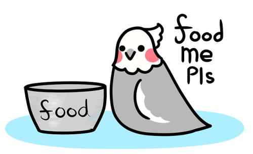 comic bird art animal food cartoon birdblr relatable humor funny cockatiel birb pet cute pastel kawaii parront parrot animals pets artists on tumblr cheeks the cockatiel