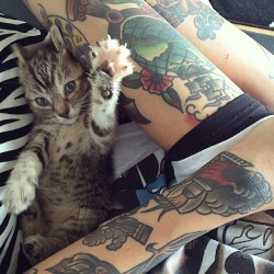 gif kitty cat love LOL photography cute hipster vintage boho indie Grunge animal fancy tattoo Alternative classy it fade pale nah vsco