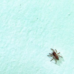 Hello Mr. Spider (at Qcase Home)
