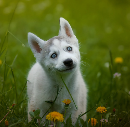 llbwwb:  Todays Cuteness,for the dog lovers:) by Sonja Probst.
