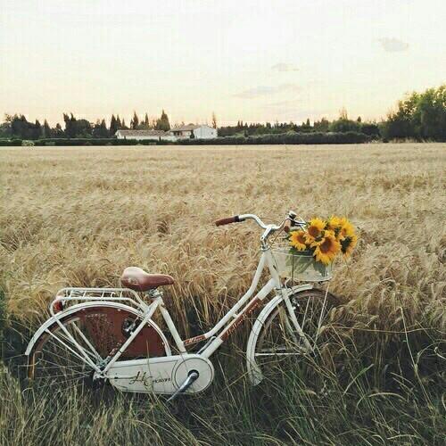 bicycle aesthetic   Tumblr