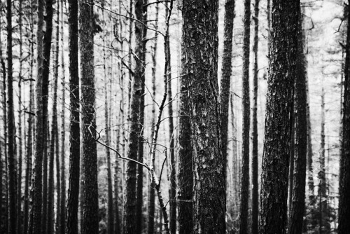 listentothemountainsound:  Forest by d o l f i on Flickr.