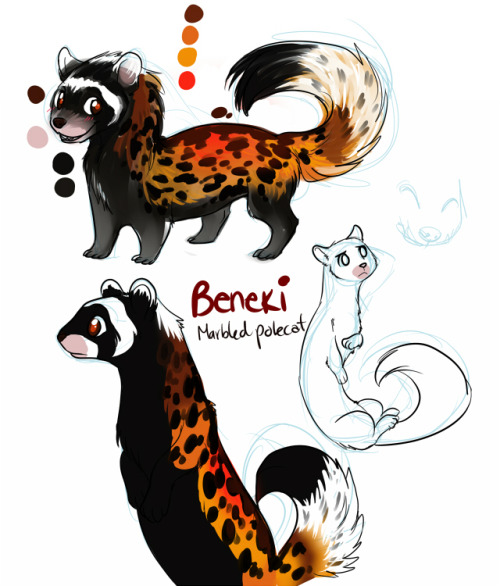 Beneki: New year, new character. He's a marbled polecat! I found these little guys and just fell in love ♥ They are adorable and I said: why not? A new character might be nice x3 and Beneki was born ♥ Hope you like it