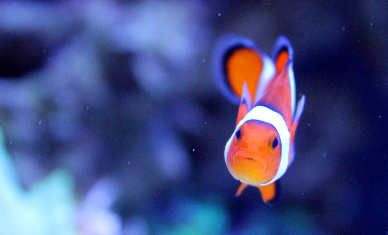 Every Clownfish is born as a male.  Clownfish live under a strict hierarchy with the group ruled by a single dominant female in charge of producing offspring.  When she dies, the head male undergoes a gender change and becomes the dominant female ruling the rest of the males once more.