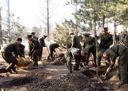 naenara:  Marking International Tree-Planting Day in North Korea
