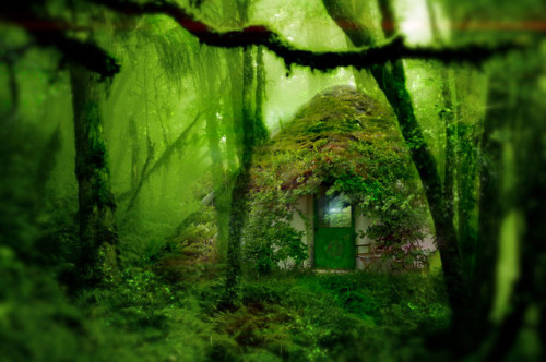 Forest House, The Enchanted Wood photo via wyldwood