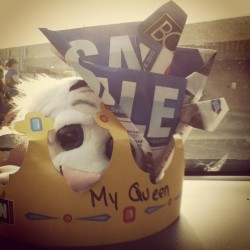 A crown from my baby, a stolen tiger named pompom, and a paper hat some great friends made together are all on my dashboard #carcollection #love #pompom #burgerkingcrown #herqueen #samurihats